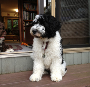 Dog Training In New Jersey Make Sit Happennew Jersey Dog Training Make Sit Happen Hillsborough Nj